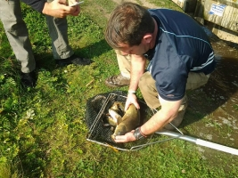 Fish census & relocation