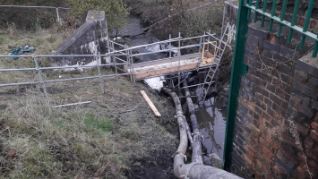 Fish Rescue by Electro Fishing, New Bypass Wigan